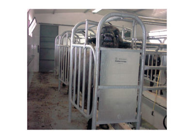 TENDEM MILKING PARLOUR