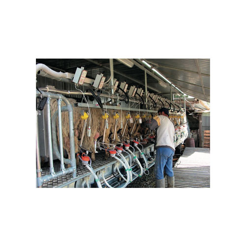 SHEEPS MILKING PARLOUR WITH ELECTRONIC DETACHER
