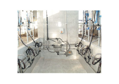 COWS MILKING PARLOUR GENERAL WIEU